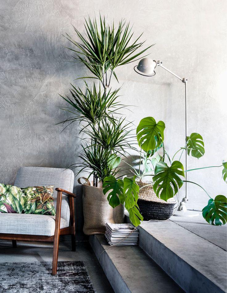 Urban Jungle Interior Design Trend Singapore